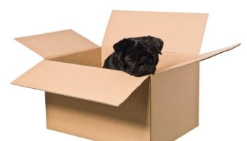 Dog in a box isolated on a white background