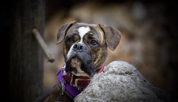 Hundeschule und HundeKiTa 4Pfoten
